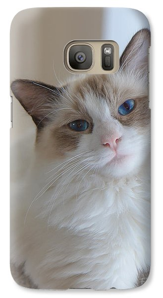 Galaxy Case featuring the photograph Blue-eyed Ragdoll Kitten by Peta Thames