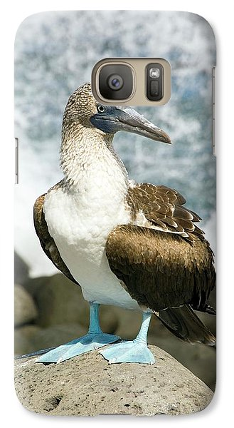 Blue-footed Booby Galaxy S7 Case by Daniel Sambraus