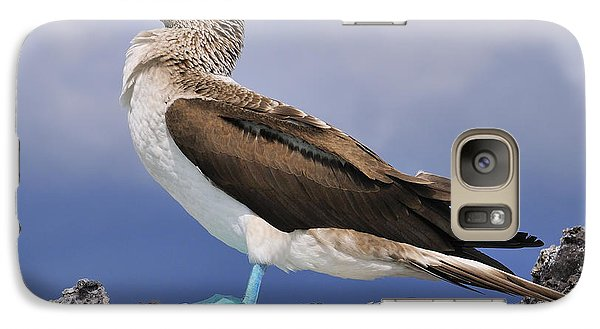 Blue-footed Booby Galaxy S7 Case by Tony Beck