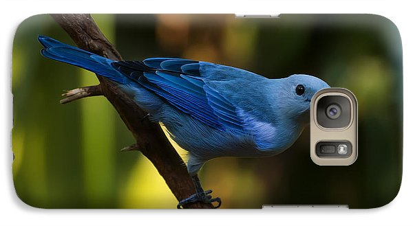 Blue Grey Tanager Galaxy S7 Case