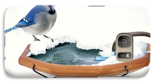 Blue Jay At Heated Birdbath Galaxy Case by Steve and Dave Maslowski