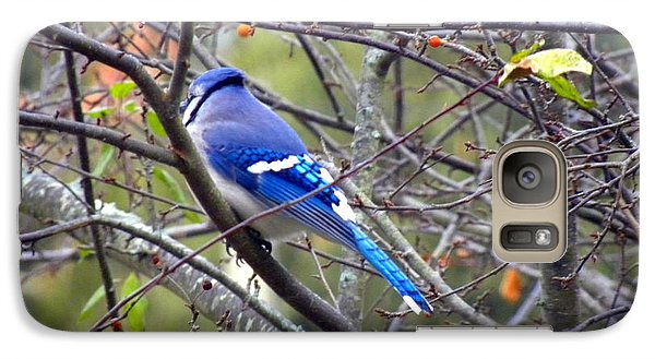 Galaxy Case featuring the photograph Blue Jay In A Cold Morning  by Edwin Alverio