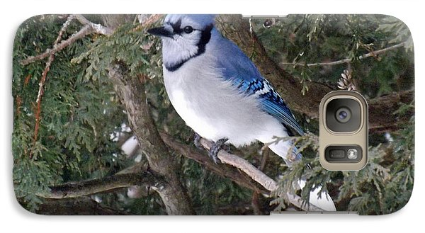 Galaxy Case featuring the photograph Blue Jay In The Cedars by Brenda Brown