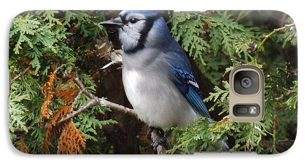 Galaxy Case featuring the photograph Blue Jay In Cedar Tree 2 by Brenda Brown