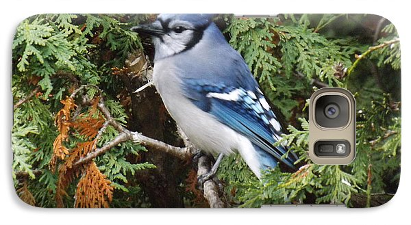 Galaxy Case featuring the photograph Blue Jay In Cedar Tree by Brenda Brown