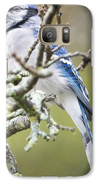 Blue Jay In The Rain Galaxy S7 Case by Ricky L Jones