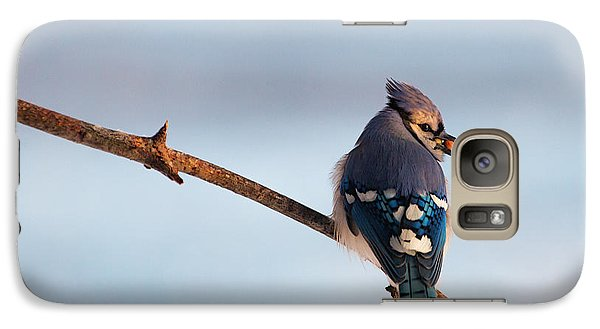 Blue Jay With Nuts Galaxy S7 Case by Everet Regal