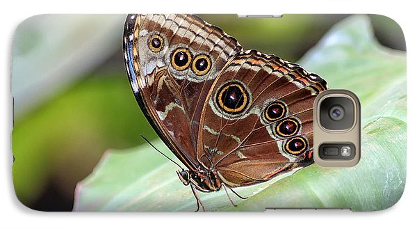 Galaxy Case featuring the photograph Blue Morpho Butterfly by Teresa Zieba
