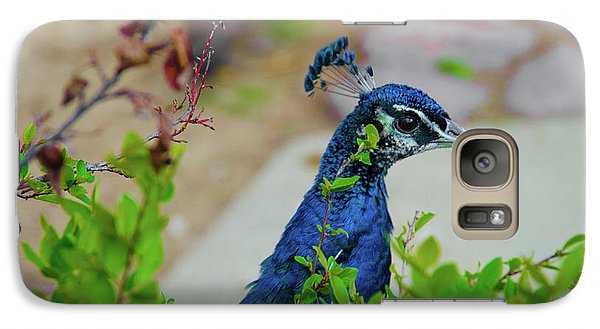 Galaxy Case featuring the photograph Blue Peacock Green Plants by Jonah  Anderson