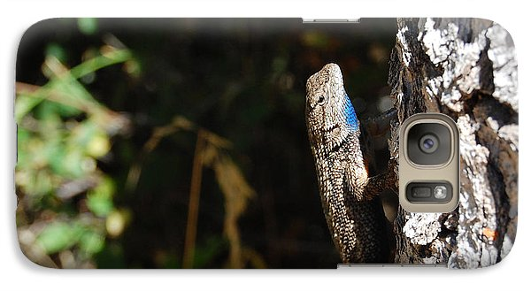 Galaxy Case featuring the photograph Blue Throated Lizard 1 by Debra Thompson