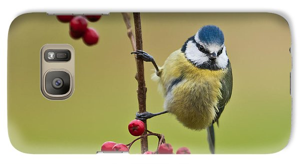Galaxy Case featuring the photograph Blue Tit With Hawthorn Berries by Liz Leyden