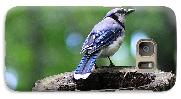 Galaxy Case featuring the photograph Bluejay by Alyce Taylor