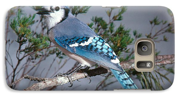 Bluejay Calling Galaxy S7 Case by John S. Dunning