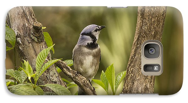 Galaxy Case featuring the photograph Bluejay In Fork Of Tree by Anne Rodkin