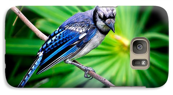 Thoughtful Bluejay Galaxy S7 Case by Mark Andrew Thomas