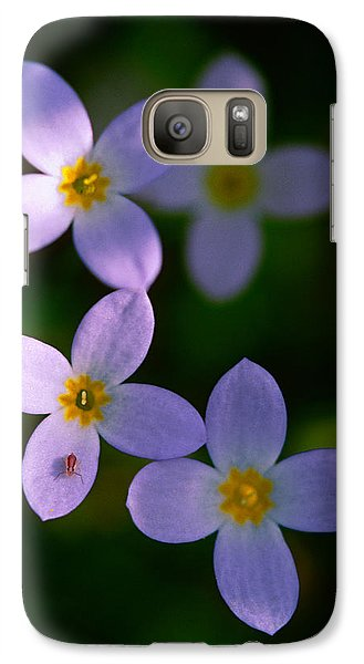 Galaxy Case featuring the photograph Bluets With Aphid by Marty Saccone
