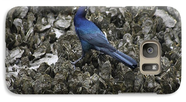 Galaxy Case featuring the photograph Boat-tailed Grackle Feeding by Jeanne Kay Juhos