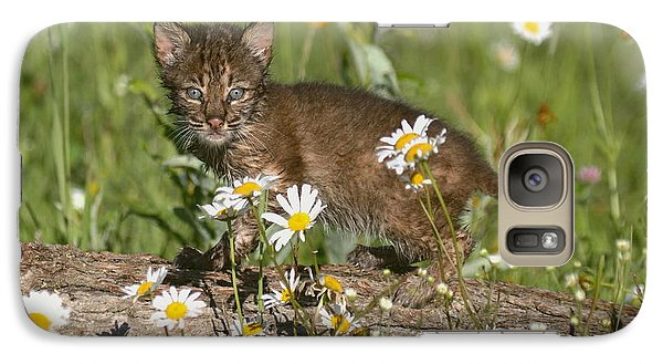 Galaxy Case featuring the photograph Bobcat Kitten In The Flowers by Myrna Bradshaw
