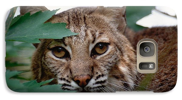 Galaxy Case featuring the photograph Bobcat With Maple Leaves by Bradford Martin