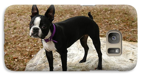 Galaxy Case featuring the photograph Boston Terrier On The Rock by Donald Williams