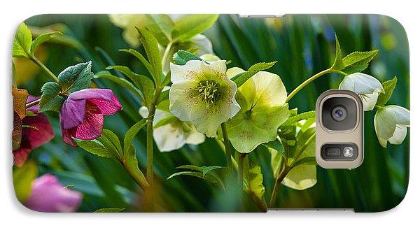 Galaxy Case featuring the photograph Bouquet Of Lenten Roses by Jordan Blackstone