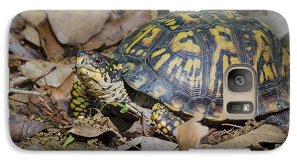 Galaxy Case featuring the photograph Box Turtle Sunning by Bradley Clay