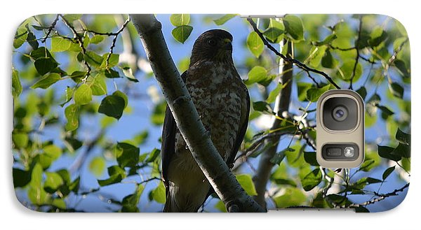 Galaxy Case featuring the photograph Broad-winged Hawk by James Petersen