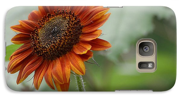 Galaxy Case featuring the photograph Bronze Sunflower by Living Color Photography Lorraine Lynch