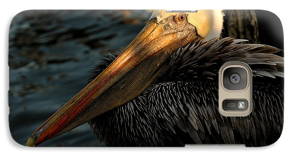 Galaxy Case featuring the photograph Brown Pelican Resting by Susan D Moody