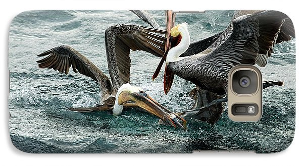 Brown Pelicans Stealing Food Galaxy S7 Case by Christopher Swann