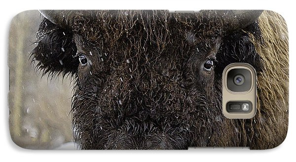 Galaxy Case featuring the photograph Buffalao In Snow by Susi Stroud