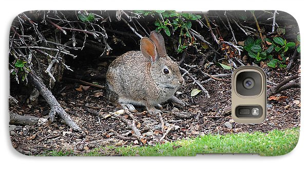 Galaxy Case featuring the photograph Bunny In Bush by Debra Thompson