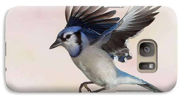 Galaxy Case featuring the photograph Busy Billy Blue Jay by Gerry Sibell