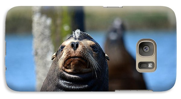 Galaxy Case featuring the photograph California Sea Lion by Gayle Swigart