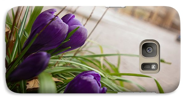 Galaxy Case featuring the photograph Campus Crocus by Erin Kohlenberg