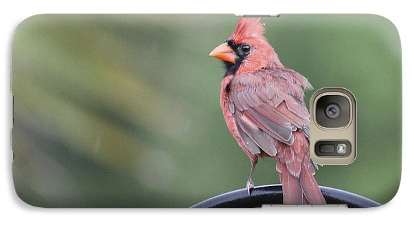 Galaxy Case featuring the photograph Cardinal In The Rain by Jeanne Kay Juhos