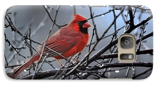 Galaxy Case featuring the photograph Cardinal In The Rain   by Nava Thompson