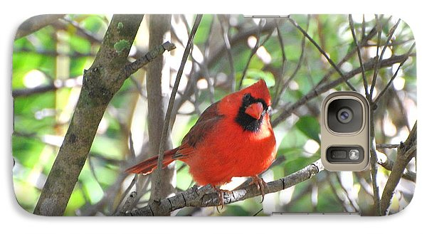 Galaxy Case featuring the photograph Cardinal In Tree by Jodi Terracina