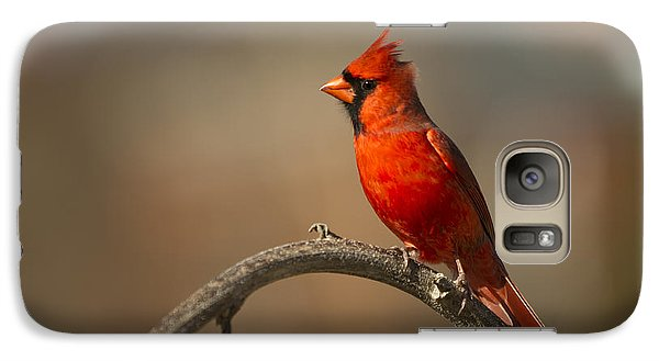 Galaxy Case featuring the photograph Cardinal by Jerry Gammon