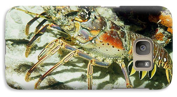 Galaxy Case featuring the photograph Caribbean Spiny Reef Lobster  by Amy McDaniel