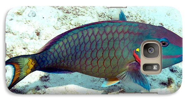 Galaxy Case featuring the photograph Caribbean Stoplight Parrot Fish In Rainbow Colors by Amy McDaniel