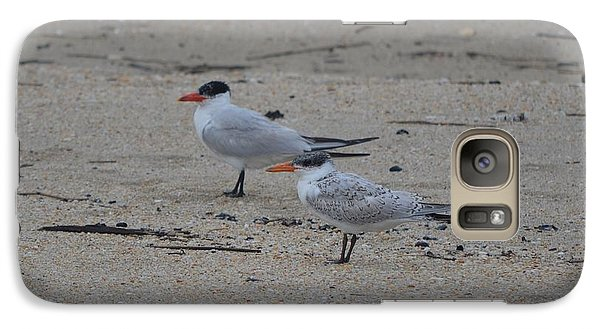Galaxy Case featuring the photograph Caspian Tern Young And Adult by James Petersen