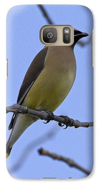Cedar Waxwing 2 Galaxy Case by Eric Mace