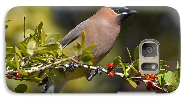 Galaxy Case featuring the photograph Cedar Waxwing And Red Berries by Kathy Baccari