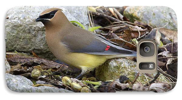 Cedar Waxwing Galaxy Case by Eric Mace
