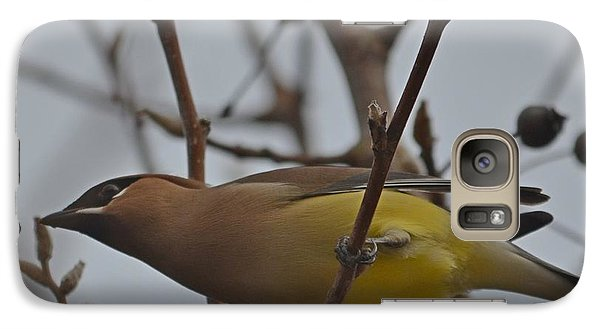 Galaxy Case featuring the photograph Cedar Waxwing Feasting In Foggy Cherry Tree by Jeff at JSJ Photography
