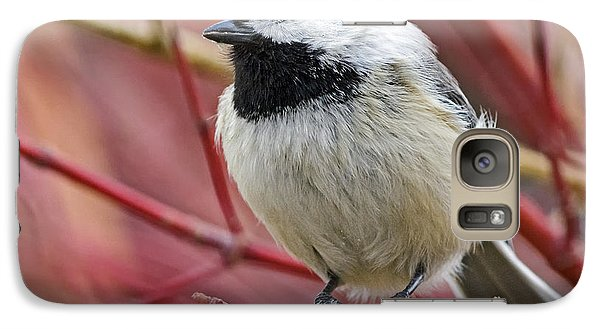 Galaxy Case featuring the photograph Chickadee In Red Twig Dogwood by Stephen  Johnson