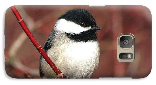 Galaxy Case featuring the photograph Chickadee by Susan  Dimitrakopoulos