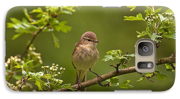 Galaxy Case featuring the photograph Chiffchaff by Paul Scoullar
