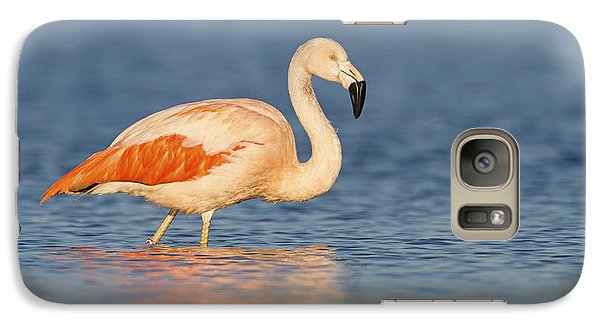 Chilean Flamingo Galaxy S7 Case by Ronald Kamphius